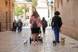 Veterinarios de Baleares recomiendan evitar sacar a pasear a los perros en las horas de más calor
