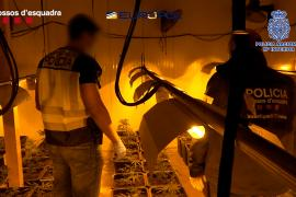 Más de 100 detenidos en la mayor operación del año contra el tráfico de marihuana en España