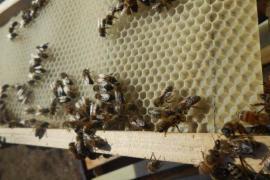 El Consell de Ibiza organiza una jornada técnica sobre la cera de abejas y los pesticidas