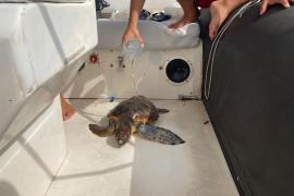 Rescatan a una tortuga marina atrapada entre plástico en Ibiza