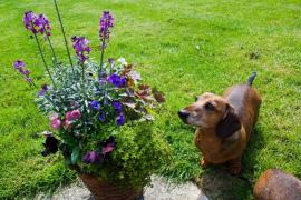 ¿Sabes que hay plantas peligrosas para tus mascotas? Consulta cuáles