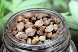 ¿Es legal comprar semillas de marihuana en España? Linda-Seeds nos da todos los detalles
