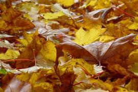 El otoño en Baleares será cálido y ligeramente seco