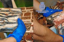 Una banda introducía hachís en España oculto entre sardinas congeladas