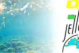 El CSIC ofrecerá al Govern un sistema de vigilancia de las medusas