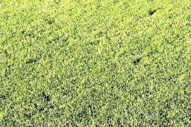 El Pitiús desmiente que haya más lanzadores esta temporada