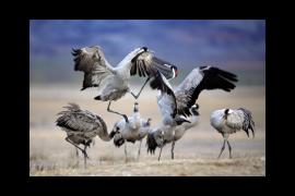 Ambientes '100% Natural', según José Benito Ruiz