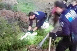 La policía localiza en Sant Jordi una pitón albina de dos metros de longitud