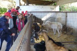 Alumnos del CEIP Anselm Turmeda de Son Roca visitaron Natura Parc