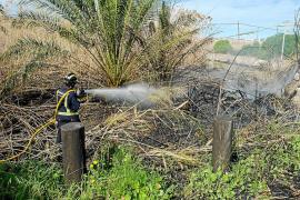 Un incendio quema 70 metros cuadrados de cañaveral en ses Feixes