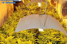 Detenido en Sant Josep por tener en su poder 24 kilos de marihuana, 7.000 libras y 1.000 euros
