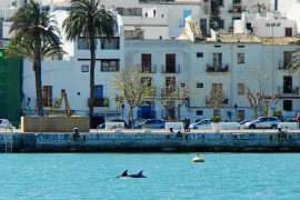 Delfines de paseo por el puerto de Eivissa