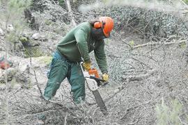 LOS NIÑOS DE SANT JOAN DESCUBREN PORQUE LOS TECNICOS FORESTALES CORTAN ARBOLES EN EL BOSQUE .