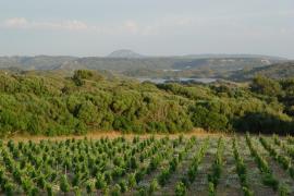 El momento dulce del vino de Menorca