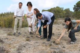 Liberadas 15 tortugas mora en Formentera por el Día Mundial de Medio Ambiente