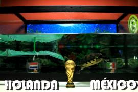 Una tortuga ibicenca pronostica los resultados del Mundial 2014