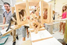Vila estrena un nuevo hogar para los gatos y reclama una mayor concienciación