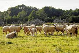 La sequía se ceba con Formentera