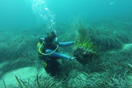 El GEN-GOB valorará el impacto del fondeo de las embarcaciones en Eivissa