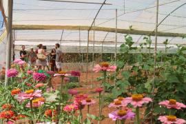 La Horticultura sostenible es más sana y económica