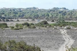 Los agricultores podrán volver a sembrar  en Can Marroig después de cuatro décadas