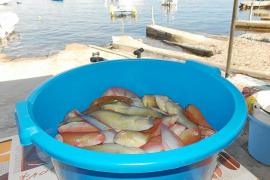 Menos embarcaciones en el primer día de pesca del raor