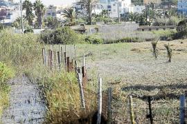 El Consell d'Eivissa retoma la campaña de control de mosquitos