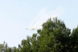 El Govern descarta fumigaciones aéreas en Formentera contra la procesionaria del pino
