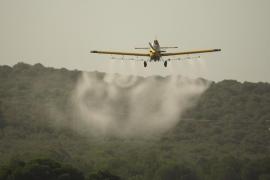 Amics de la Terra vuelve a denunciar las fumigaciones «inadecuadas» con Dimilin