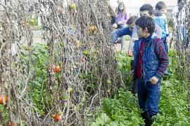 Los pequeños descubren el campo