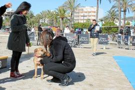 Premio para los canes obedientes, más simpáticos o mejor disfrazados