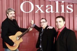El flamenco de Oxalis sonará en la celebración del Día de Andalucía
