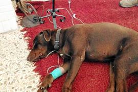 La Guardia Civil continúa investigando el caso de envenenamiento de perros