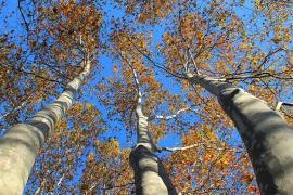 Aprueban el plan forestal de Balears con un presupuesto inicial de 185 millones