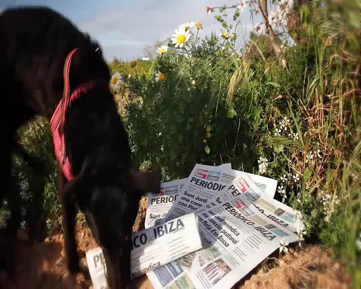 Periódico de Ibiza y Formentera, tenemos mucho que contarte