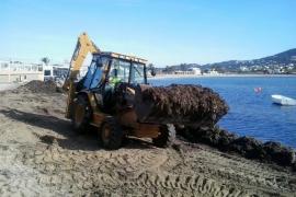 Vila empieza a retirar la posidonia de las playas del municipio