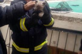 Los bomberos rescatan un gatito de un pozo en Sant Antoni