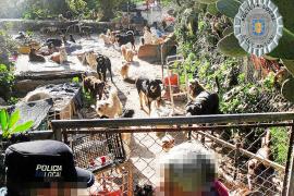 Denuncian a una vecina de Buscastell por tener 100 animales en su casa