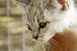 Die richtige Pflege von Katzen