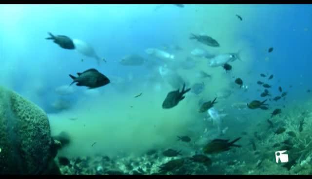 VÍDEO: Continúan los vertidos de aguas fecales de la depuradora de Formentera