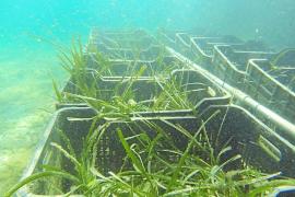 Ausländische Kapitäne zeigen wenig Verständnis für die Bedeutsamkeit der Seegrass-Wiesen