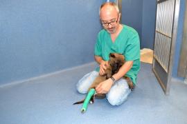 El maltratador del cachorro Luna ha sido condenado a tres meses y un día de prisión