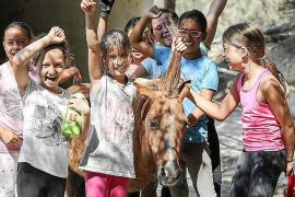 Verano entre caballos y naturaleza