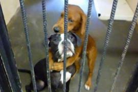 Dos perros que iban a ser sacrificados se salvaron gracias a una foto suya abrazados