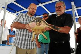 Meeresschildkröten vor den Küsten Ibizas und Formenteras
