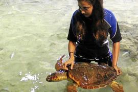 Una tortuga boba herida y mayor de 10 años se recupera en Sant Antoni