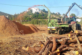 La hora de la biomasa en Eivissa