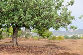 De Sans pide que el decreto de sequía se aplique «con cautela y sentido común»