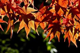 El otoño se prevé más cálido de lo normal
