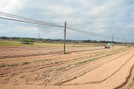 Formentera cuenta con 105 hectáreas cedidas a la Cooperativa des Camp